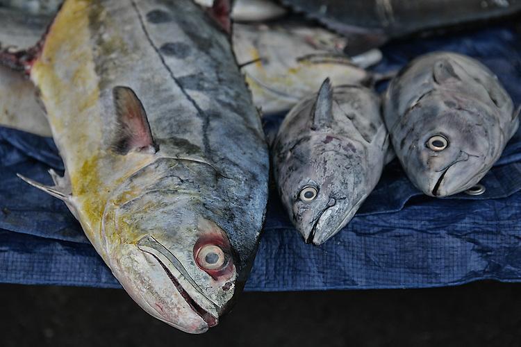 &copy;2014 David Burnett / <br /> Contact Press Images<br /> November 16, 2014<br /> <br /> Oman:  Samsung NX1  30, 16-50 lens/85mm<br /> <br /> Muscat, Oman<br /> fish market downtown<br /> market/souq<br /> highway on edge of city (vistas)