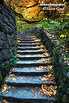 A cobblestone stairway leading into brilliant fall colored trees.