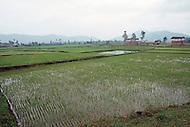 Danang, February 1988. Rice paddies near Danang.