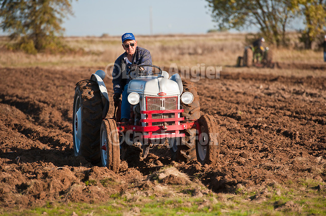 Antique tractors plowing a field in fall during the Branch 158 EDGE & TA Fall Plow Day and Plowing Seminar near Pleasant Grove, Calif...Silmer Scheidel Farm..Joe Garcia plowing with his c. 1950 Ford 8N tractor