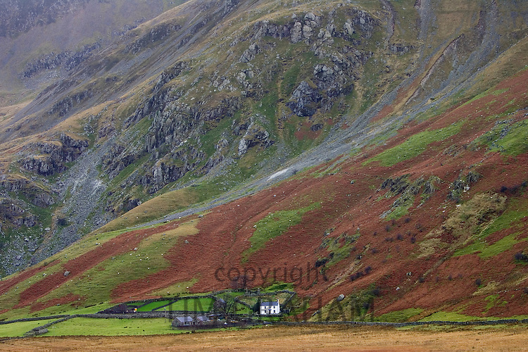 Hill farm in Snowdonia National Park, North Wales, United Kingdom RESERVED USE - NOT FOR DOWNLOAD -  FOR USE CONTACT TIM GRAHAM