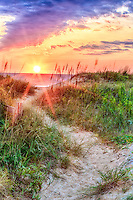 A path through the dunes to a Outer rBanks beach in Kitty Hawk , NC.