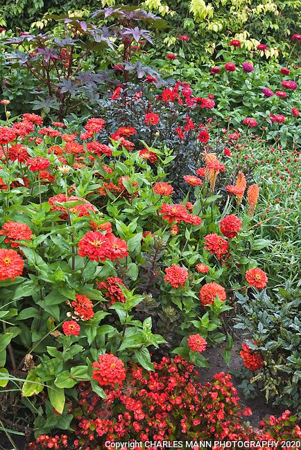 The Drop Dead Red garden at Denver Botanic Garden was designed by horticulturist and gardenwriter Rob Proctor.