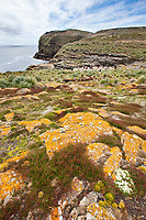 New Island, Falkland Islands, United Kingdom