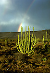 Mexico: Sonoma Desert, Rainbow over Saguara Cactus,  Photo: mxkino104.Photo copyright Lee Foster, www.fostertravel.com, 510/549-2202, lee@fostertravel.com