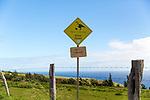 The scenic drive to Halawa Valley along Highway 450 on the island of Molokai, Hawaii, USA