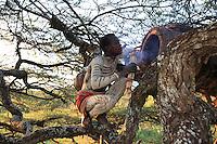 The traditional hives, harvested with flames and smoke, only produce 3 to 5 kg per year and the wax cannot be separated from the honey.///Les ruches traditionnelles, récoltées à la flamme et à la fumée, produisent seulement 3 à 5 kg par an et ne permettent pas de séparer le miel de la cire.