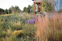 Xeriscape New Mexico meadow garden lawn substitute with Little Bluestem grass (Schizachyrium scoparium) on right, snakeweed and Liatris, design by Judith Phillips