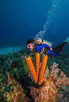 10 July 2013: SCUBA diver Sally Herschorn glides over a grouping of sponges at the Bear's Paw Reef off the North Shore of Grand Cayman Island. Located in the British West Indies in the  Caribbean, the Cayman Islands are renowned for excellent scuba diving, snorkeling, beaches and banking.  Mandatory Credit: Ed Wolfstein Photo