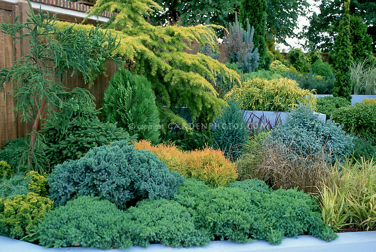 Different Kinds Of Evergreen Trees And Shrubs Mixed In Tiers Plant