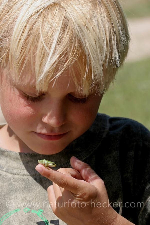 Junge, Kind mit einem kleinen Laubfrosch, Laub-Frosch, Frosch auf dem Finger, Hyla arborea, Hyla europea, European treefrog, common treefrog, Central European treefrog