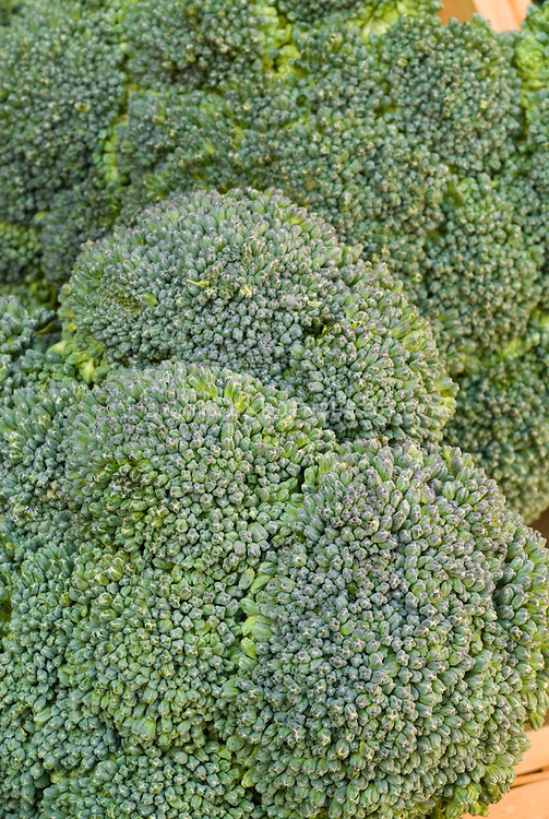 Picked broccoli spears showing heads and stems