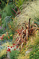 Modern mixed border with ornamental grass (Cortaderia) and Phormium at San Francisco Botanical Garden entry