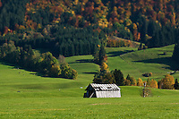Old wooden barn in farm field with autumn color trees in background, Wagneritz, Allgäu, Germany