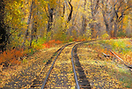 Fall color and train tracks along the Cumbres & Toltec Scenic Railroad, Chama, New Mexico USA