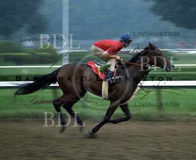 Davona Dale, Calumet Farm champion, at Saratoga 1979