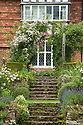 Upton Grey, steps up from the Rose Garden to the Rose Pergola in front of the house, mid July.