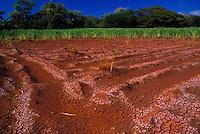 Sugar cane field (furrows) of Gay & Robinson Plantation near Salt ponds, Hanapepe, Kauai south shore.