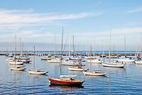 Sail Boats, Harbor Martha's Vineyard MA