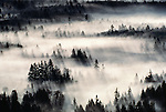 An aerial view of the Snohomish delta shows fog-shrouded trees in the backlight of the early morning sun, Washington, USA.