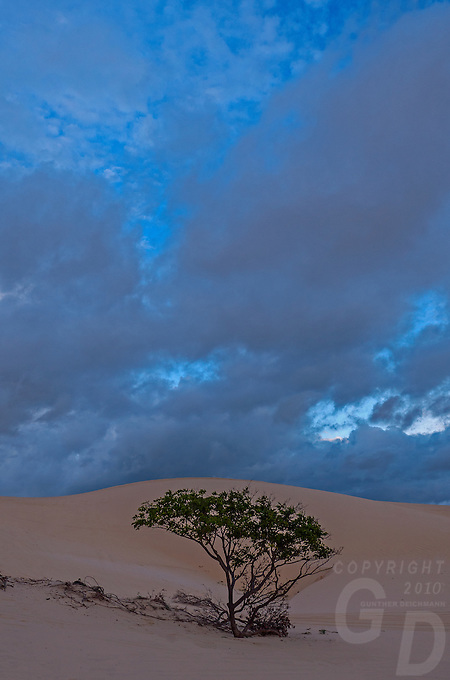 Late afternoon sunlight light and a dramatic black sky from a approaching tropical storm is setting the mood for the Mui Ne Sand dunes. <br /> The Mui Ne sand dunes in Central Vietnam are a fascinating geological phenomenon. The dunes, once the bane of developers in the area, are constantly shifting; the small patch of desert is actually growing! The large lake situated between the dunes is actually becoming filled in by sand, meaning that the most valuable water source in the area may disappear one day altogether.