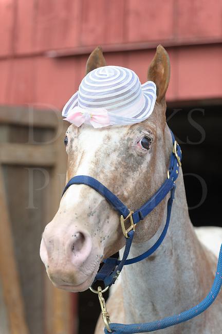 Horse Wearing Easter Bonnet