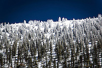 Like powdered sugar on dessert, a light dusting of snow coats trees at the summit of Monarch Pass in the Colorado Rockies.
