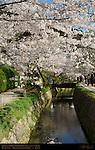 Sakura Philosopher's Path Tetsugaku no Michi Biwa Canal Higashiyama foothills Kyoto Japan
