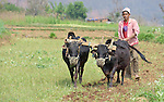 A farmer plows a field in Adamtar, an indigenous village in Nepal's Dhading District.