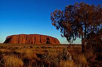 AYERS ROCK AND KANGAROO, AUSTRALIA