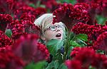 Foto: VidiPhoto<br /> <br /> TUIL - Onverwachte hulp voor bloemenkweker Rijk de Jongh uit Tuil bij Waardenburg woensdag. Buitenspelen is er voor Anne (8), Eva (6) en Roos (4) (foto) niet bij vanwege het natte weer, maar gelukkig heeft oom Rijk een grote kas vol met bloemen en kan hij wel een paar handjes extra gebruiken. Op dit moment wordt de exclusieve Celosia Turbo geoogst, een reuzenbloem van ruim anderhalve meter hoog en een bloem zo groot als een kinderhoofd. Voor de nichtjes van de Tuilse kweker is het net een doolhof. De Jongh is de enige kweker in Nederland met deze bijzondere soort, die enorm gewild is als blikvanger in hotellobby's en ook veel aan rijke consumenten in het buitenland verkocht wordt. Omdat vandaag de Russische grenzen officieel gesloten worden voor de Nederlandse bloemensector, moet rijke Russen ze via een omweg zien te bemachtigen. Bloemenkwekers verwachten door de boycot dalende prijzen op de bloemenveilingen. Nederlandse bloemen en planten zijn namelijk zeer populair in het voormalige Oostblok.