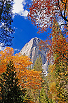 Fall color under the Washington Column, Yosemite Valley, Yosemite National Park, California