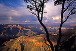South Rim Grand Canyon taken near Yavapai Point sunset light on rock formations evening light with silhouetted tree Arizona State USA.