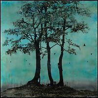 Alison West Brown - Art Rep