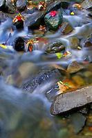 Autumn Brook  #L12