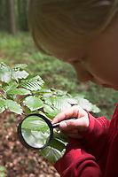 Mädchen, Kind untersucht, betrachtet mit Lupe ein Buchen-Blatt im Wald, Rot-Buche, Rotbuche, Buche, Fagus sylvatica, Common Beech, European Beech, Fayard, Hêtre commun