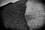 Discarded coal dumped over gigantic earthen mound outside a coal processing plant, Wuhai, Inner Mongolia, China.