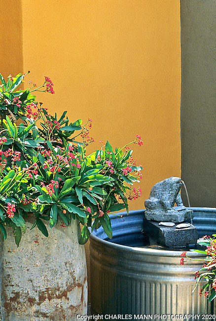 Garden designer Carrie Nimmer of Phoenix created a striking and modern garden vignette by making a simple  fountain from a galvanized pail and installing a colorful red flowered Euphorbia and framng both with an ocher wall.