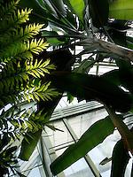 Tropical Rainforest Glasshouse (formerly Le Jardin d'Hiver or Winter Gardens), 1936, René Berger, Jardin des Plantes, Museum National d'Histoire Naturelle, Paris, France. Low angle view of a Musa Plants against the Art Deco entrance of the glasshouse.