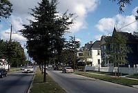 1996 October 07..Conservation.Lamberts Point..Lamberts Trees looking East...NEG#.NRHA#..