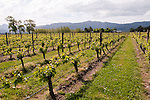 New Zealand, South Island, Marlborough, winery touring and tasting of Cloudy Bay Winery  Sauvignon Blanc and Pinot Noir wine. Photo copyright Lee Foster. Photo #126304