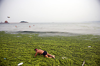 Qingdao Algae Bloom