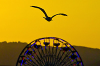 A Seagull flies above Santa Monica on Tuesday, June 18, 2013.