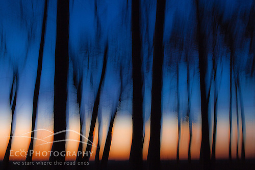 Sunrise tree abstract, Rye, NH.