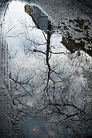 reflection of barren winter tree in puddle