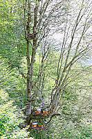 """Near the village of Senyuva where he is the mayor, Atilla Guneri, 63 years old and retired teacher, inspects his modern hives set up on a platform in a beech tree. High up in the tree, a trunk hive, a """"Kara kovan"""", reminds him of his youth. Today, Attila has a hard time climbing to the top of the trees. He still owns 5 trunk hives to maintain the tradition and fifty or so modern hives. ///Près du village de Senyuva, dont il est le maire, Atilla Guneri, 63 ans, instituteur à la retraite inspecte sur une plateforme installé dans un hêtre ses ruches modernes. Tout en haut de l'arbre, a trunk hive, Kara kovan, lui rappelle sa jeunesse. Attila peine aujourd'hui pour monter à la cime des arbres, il possède encore 5 ruches troncs pour maintenir la tradition et une cinquantaine de ruches modernes."""