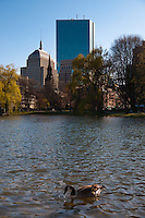 Duck swimming in lagoon of Public Garden with Boston skyline and Hancock Tower behind