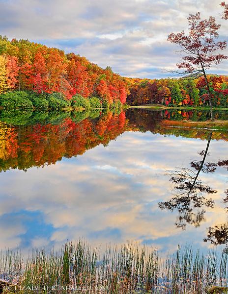 Autumn Kaleidoscope II