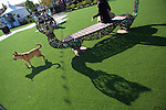 Dog park opens at the Village at San Antonio Center