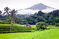 Bali, Tabanan, Jatiluwih. At 700m altitude, with beatiful terraced paddy fields.
